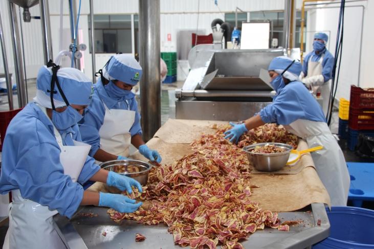Au Pérou, l'organisation paysanne AGROPIA inaugure sa propre fabrique de chips de pommes de terre ! Image principale