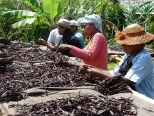 Une SCOP et une ONG pour soutenir le commerce équitable à Madagascar Vignette