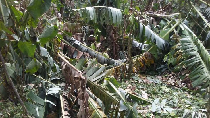 L'ouragan Matthew frappe durement Haïti Image principale