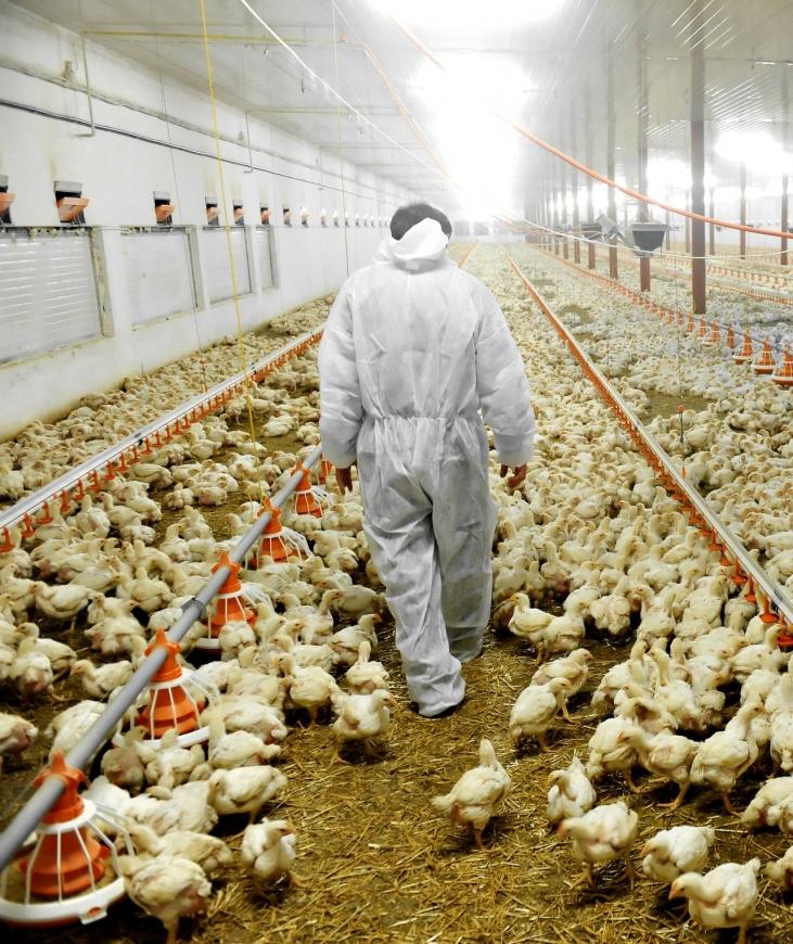 L'élevage industriel menace les paysans du Sud Image principale