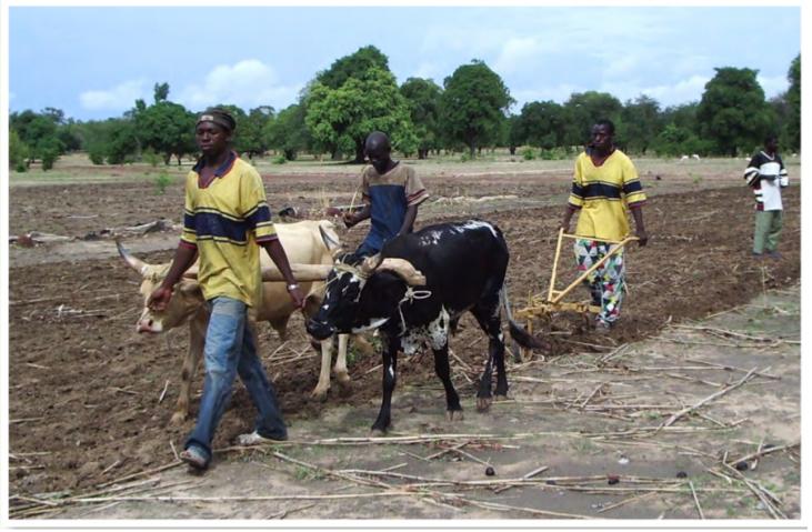 Agroécologie au Sud Mali CUMA Image principale