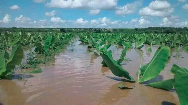 """En el Norte Perú , el """"niño costero"""" deja muchas zonas rurales y familias productoras damnificadas Image principale"""