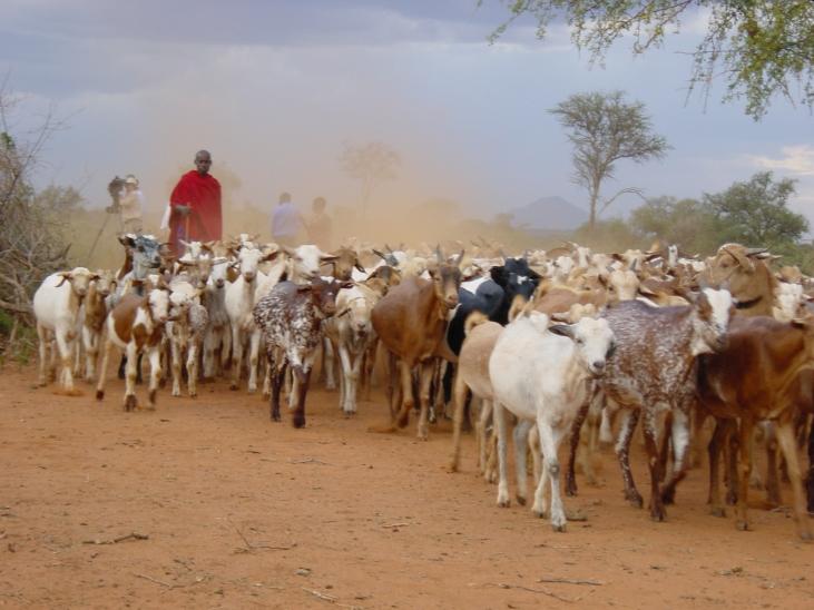 Pour des politiques publiques en faveur du pastoralisme Image principale