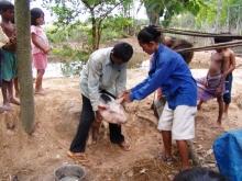 Santé animale et santé publique au Cambodge Vignette