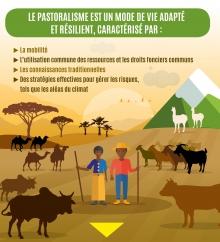Le pastoralisme en chiffre Vignette