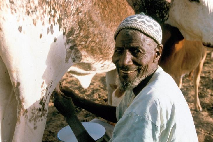 Résilience et réponse aux crises des ménages vulnérables dans les régions de Tombouctou et de Taoudéni au Nord Mali Image principale