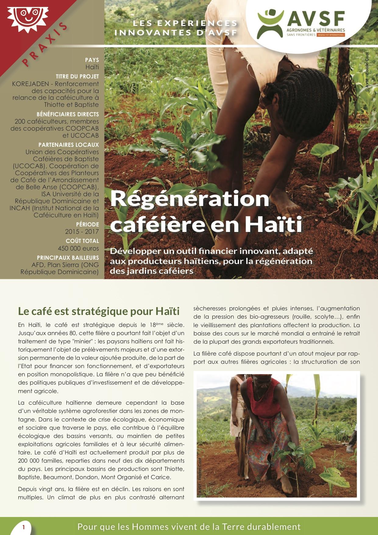 Les expériences innovantes d'AVSF : Régénération caféière en Haïti Image principale