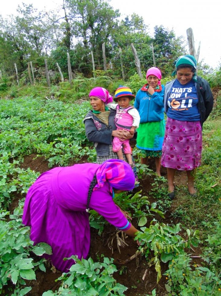 Production agoécologique pour les femmes et les jeunes Lenca au Honduras Image principale