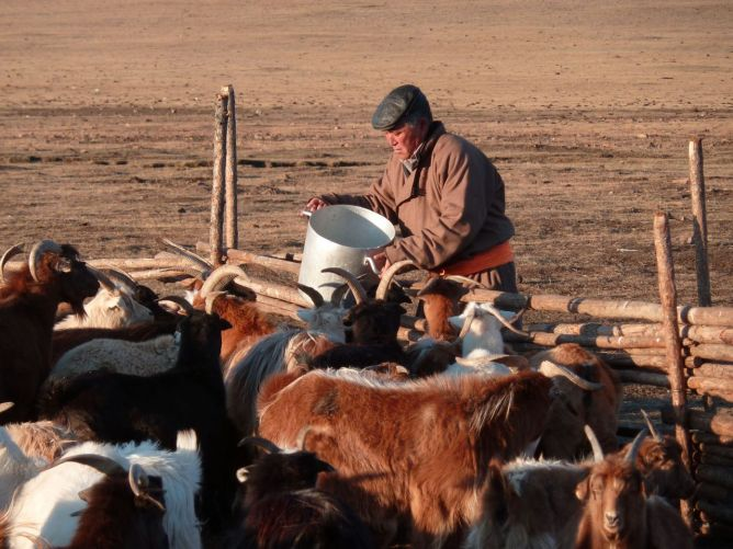 Une filière de fibre de cachemire durable en Mongolie Image principale