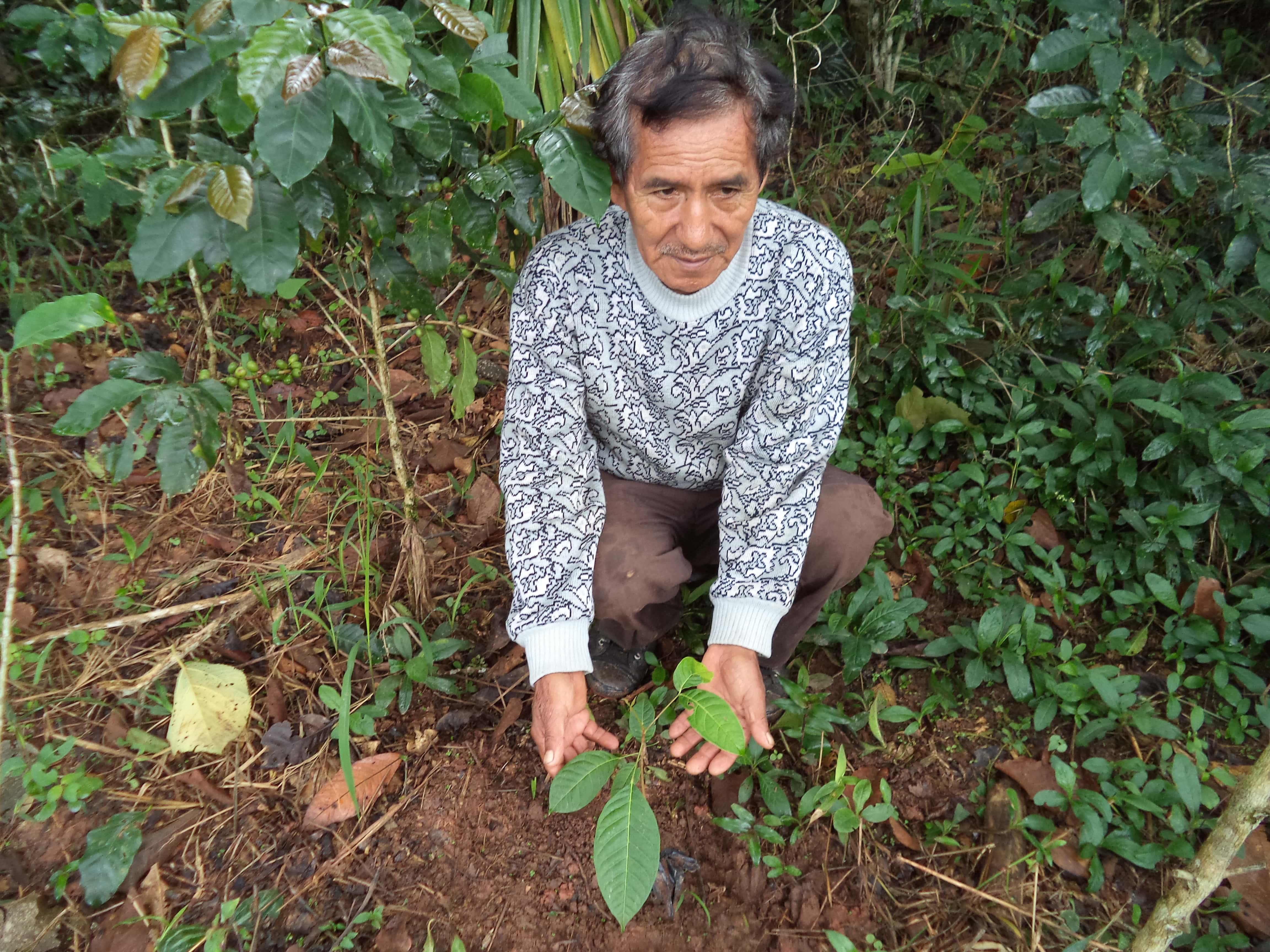 Pérou - Reforestacion Selva Central ©Frank Celi Montero 2017  (10).JPG