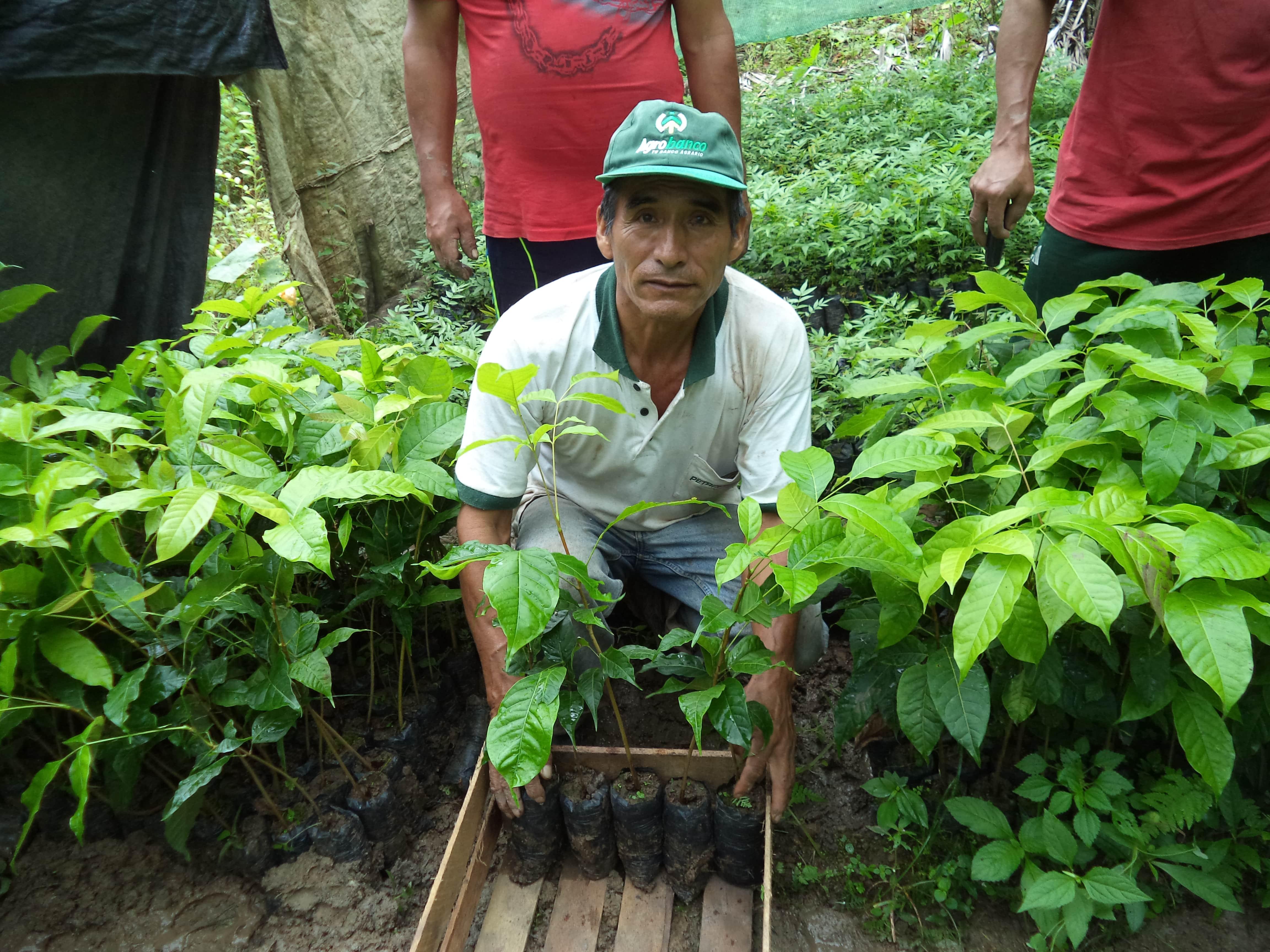 Pérou - Reforestacion Selva Central ©Frank Celi Montero 2017  (11).JPG