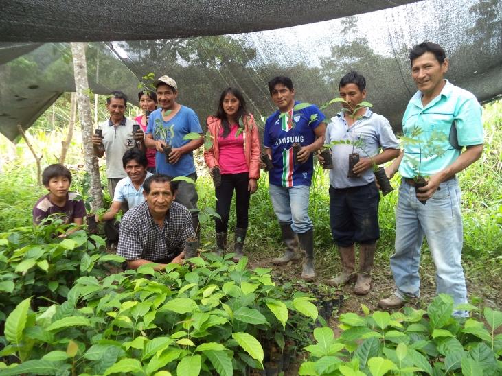 Agroforesterie en zone caféière et cacaoyère au Pérou  Image principale
