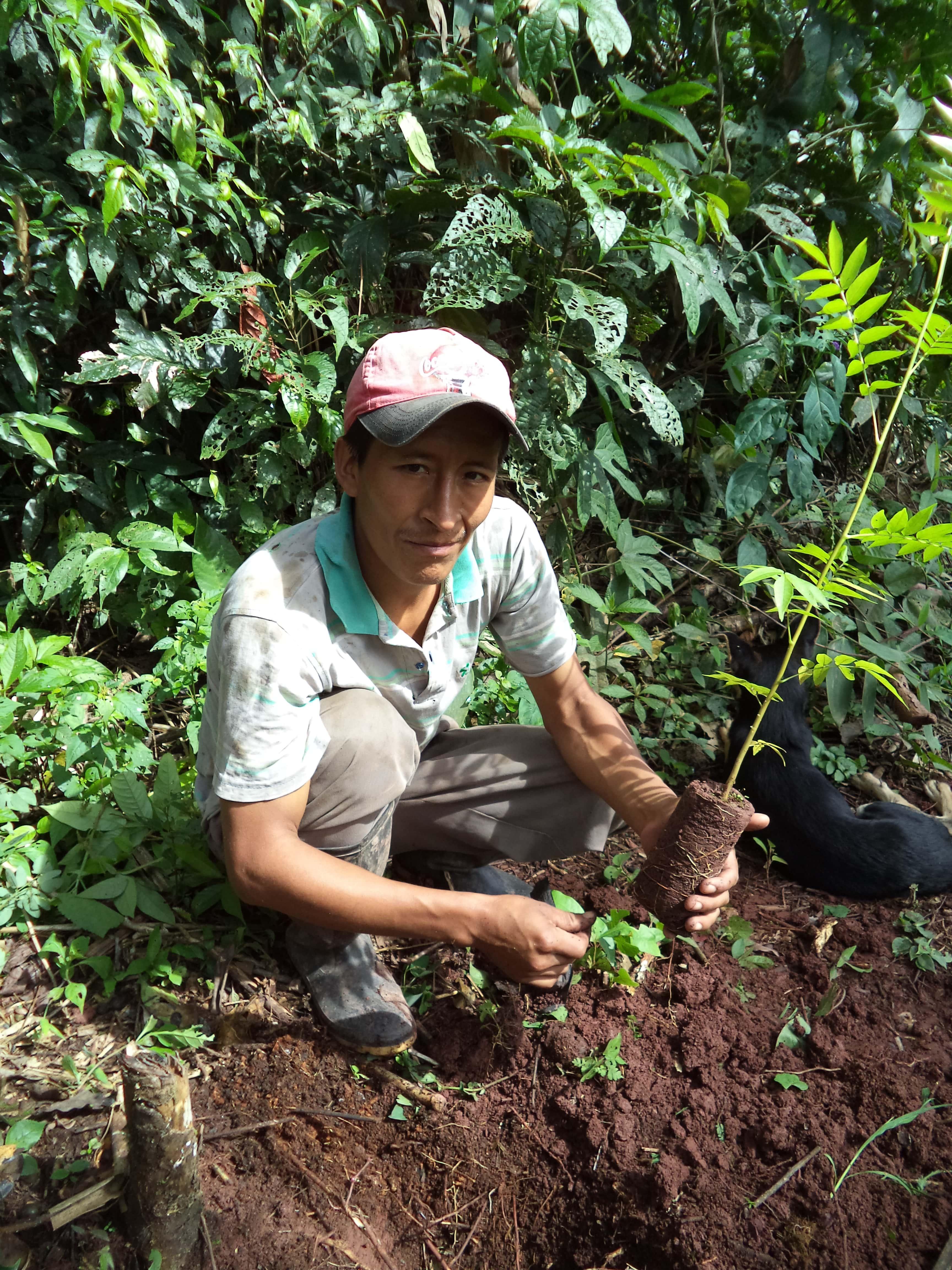 Pérou - Reforestacion Selva Central ©Frank Celi Montero 2017  (9).JPG
