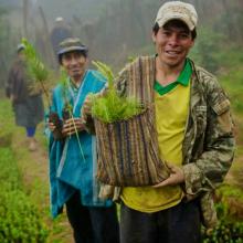 COP23 : l'agriculture peut aussi être la solution ! Vignette