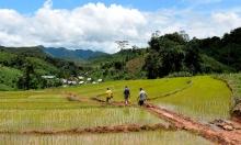 Tribune : aide au développement, place enfin à l'agriculture ! Vignette