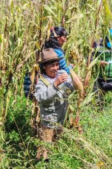 Commerce équitable et maïs blanc à Cusco au Pérou  Vignette