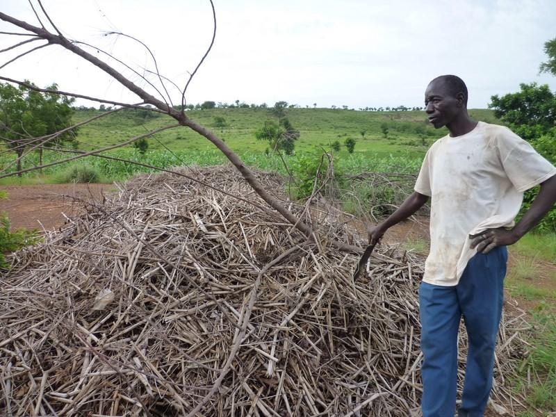 compost tiges sorgho SAVANES TOGO_AVSF.JPG