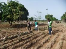 Agroécologie en Afrique de l'Ouest Vignette