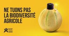 AVSF lance une nouvelle campagne de sensibilisation Vignette