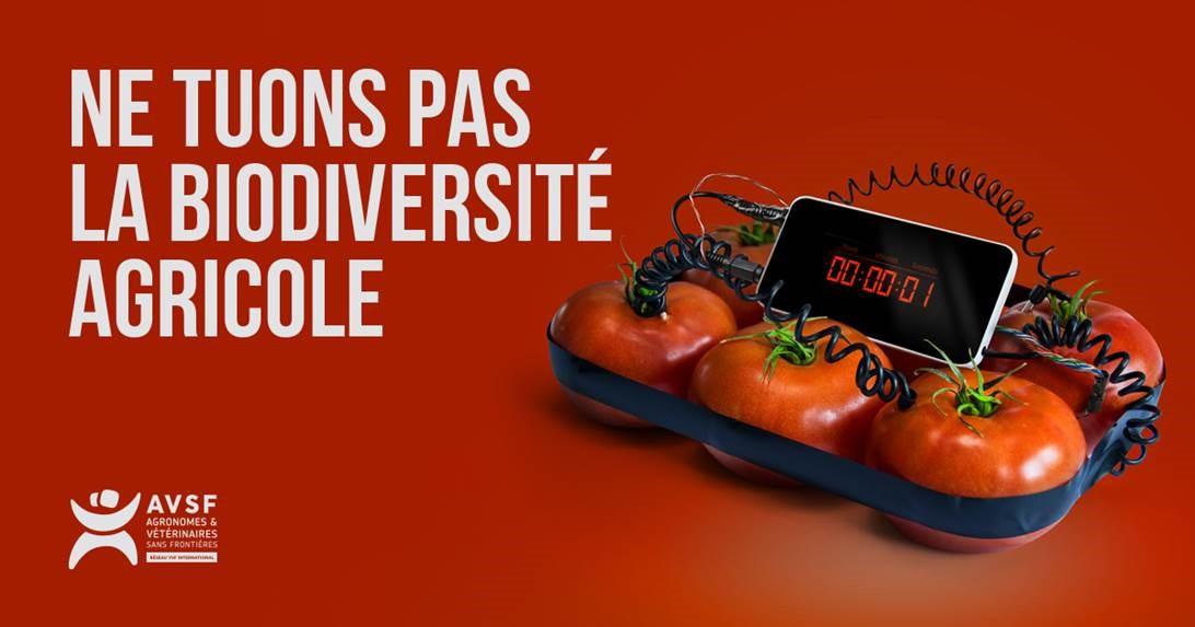 tomate_détonateur_AVSF.jpg