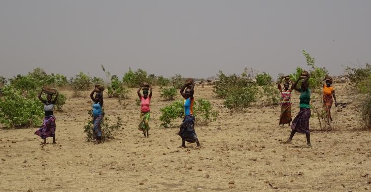Le projet CALAO : évaluer les performances de l'agroécologie en Afrique de l'Ouest Image principale