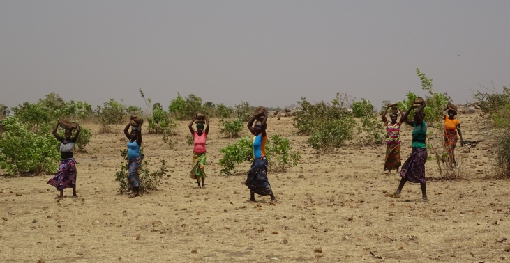 CALAO project: evaluation of agro-ecological practices in West Africa Image principale