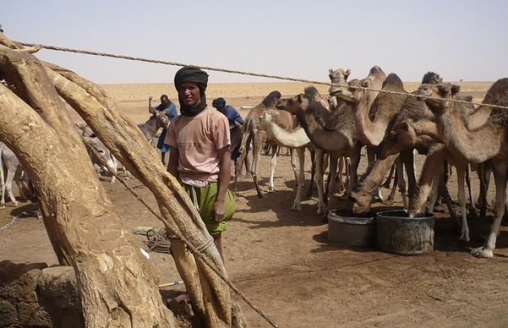 La soudure agro-pastorale s'annonce très difficile au Sahel Image principale
