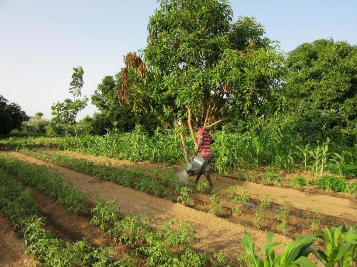 GTAE - Groupe de travail sur les transitions agroécologiques Image principale