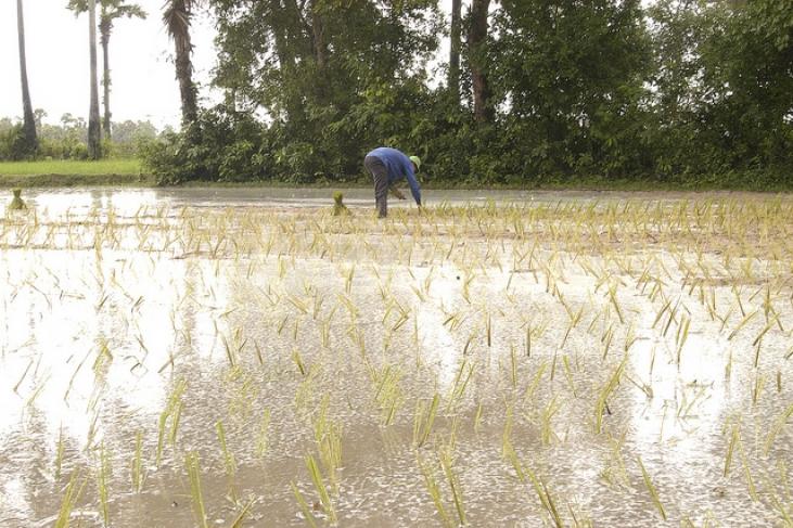 Conserver le riz au Cambodge Image principale