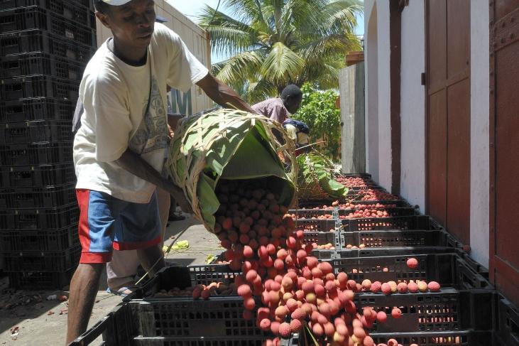 À Madagascar, transformation du litchi pour réduire le gaspillage Image principale