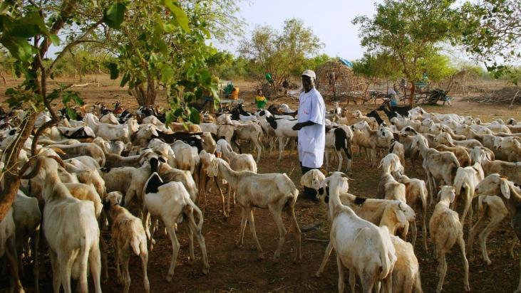 Élevage paysan au Sénégal : quelle évolution souhaitons-nous ? Image principale