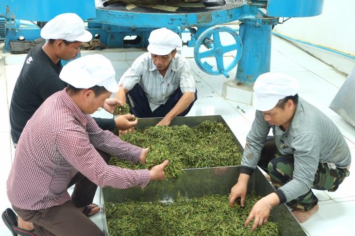 Du thé pour lutter contre la pauvreté au Laos  Image principale