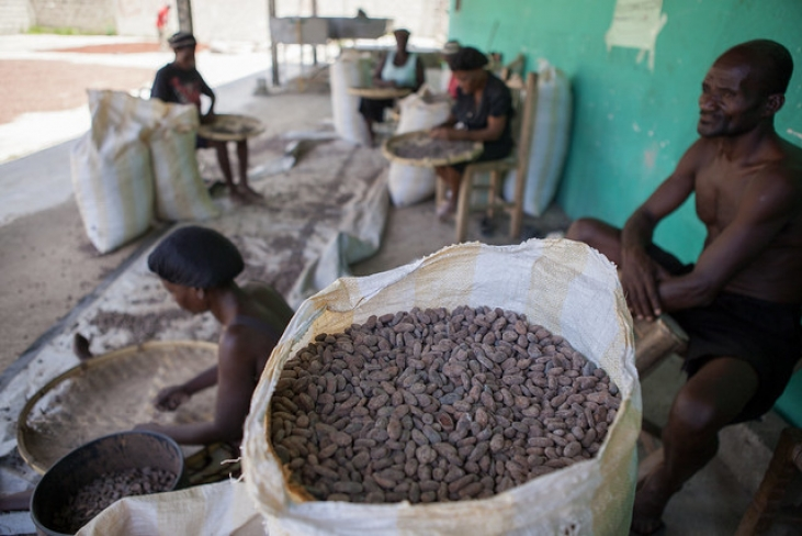 Une production durable de vétiver et cacao en Haïti Image principale