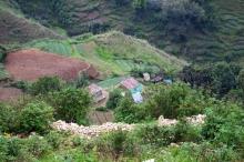 Des jardins caféiers et cacaoyers au Sud Haïti Vignette