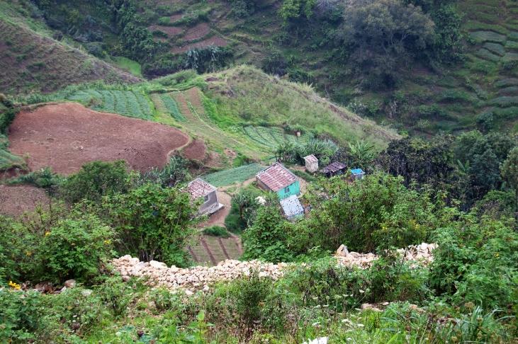 Des jardins caféiers et cacaoyers au Sud Haïti Image principale