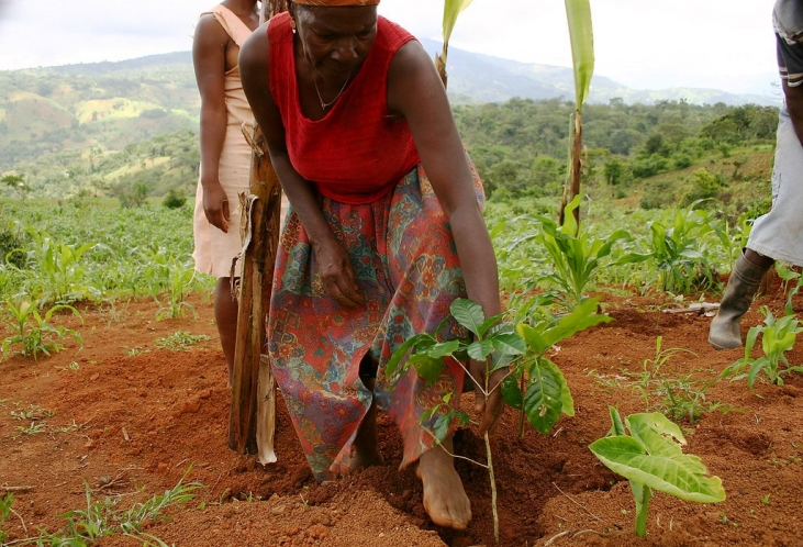 Gouvernance Agricole Inclusive en Haïti Image principale