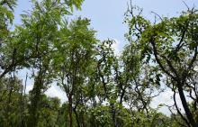 Des terres et espaces forestiers restaurés et protégés au Togo Vignette
