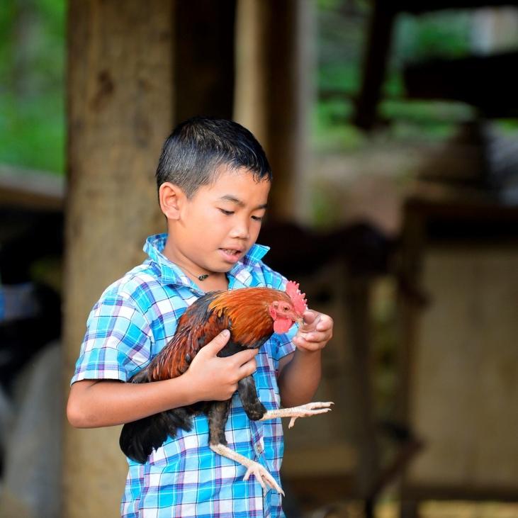 Intensifier et diversifier la production agricole pour réduire la malnutrition au sud Laos  Image principale