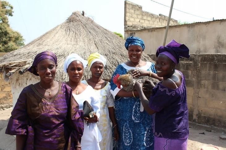 Renforcement de la résilience des ménages vulnérables à l'insécurité alimentaire et la malnutrition Image principale