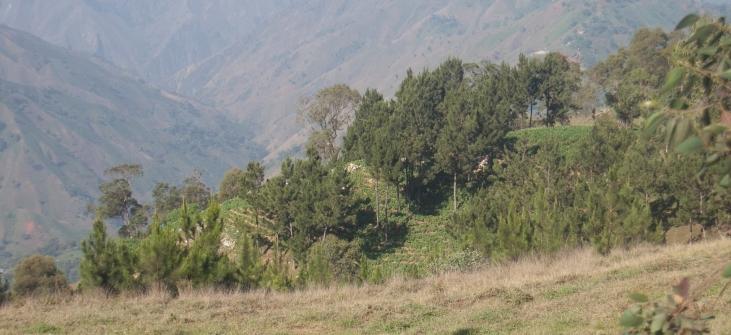 Lots boisés et parcelles agroforestières en Haïti Image principale