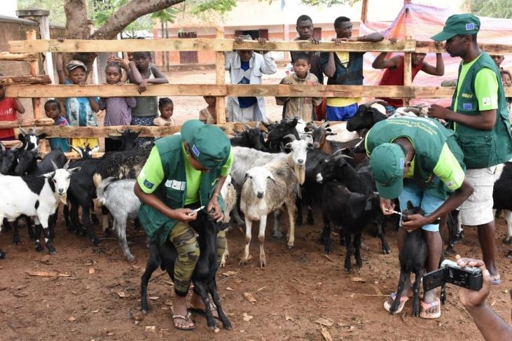 Harmonisation du réseau de santé animale de proximité à Madagascar Image principale
