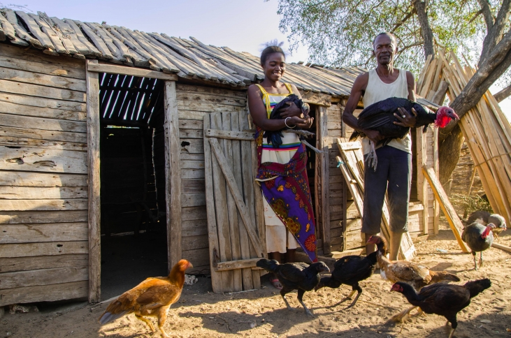 Sécurité alimentaire et agroécologie dans le Sud de Madagascar  Image principale