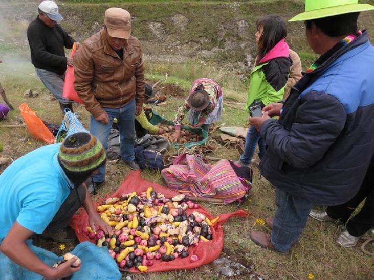 Proyecto de papas nativas en Perú Image principale