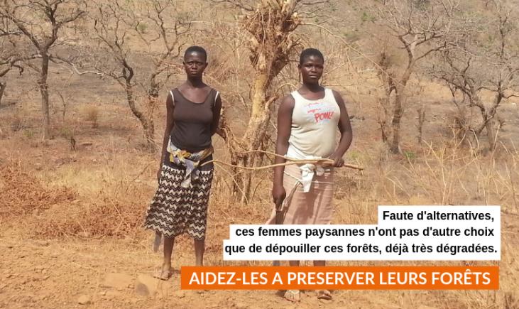 Sauvez les forêts togolaises Image principale