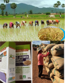 Linking Cambodian Palm Sugar and Rice Smallholder Farmers to Profitable Market in France Vignette