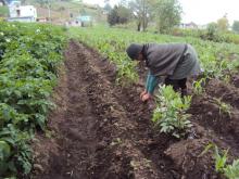 Appui au développement et renforcement de l'agroécologie et des circuits courts de commercialisation en Equateur Vignette