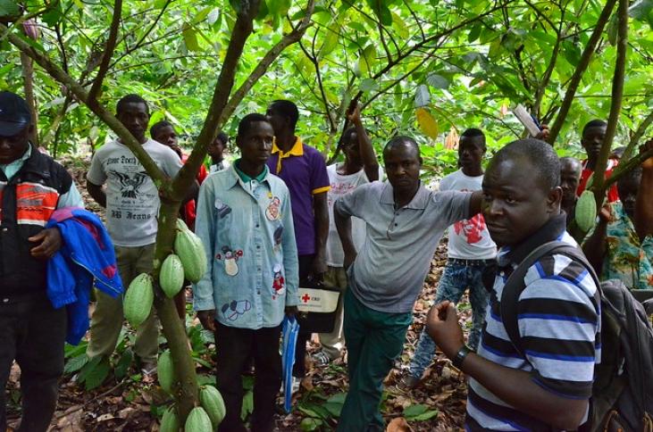 Cacao biologique et équitable au Togo Image principale
