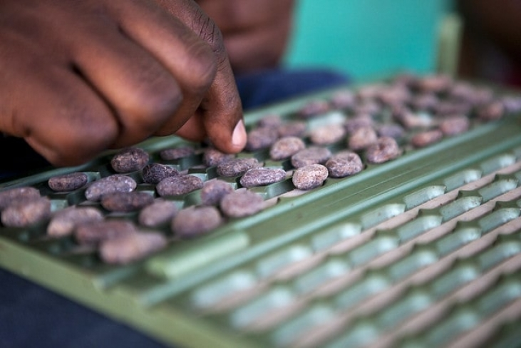 Des techniques agricoles et agroforestières innovantes pour le café en Haïti Image principale