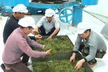 Du thé pour lutter contre la pauvreté au Laos  Vignette