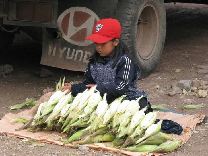 Proyecto maiz blanco - Cac Imillay, Cusco  Image principale